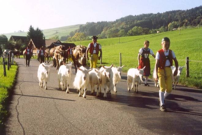 Swiss Agriculture