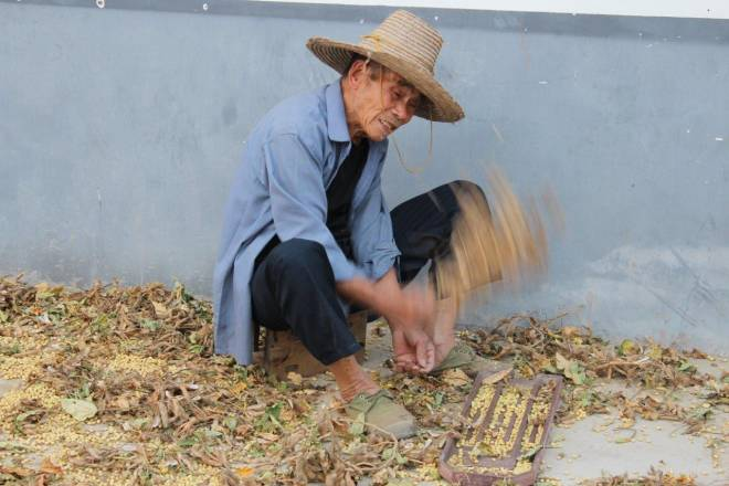 Cleaning Soybeans in China - We can take you there!