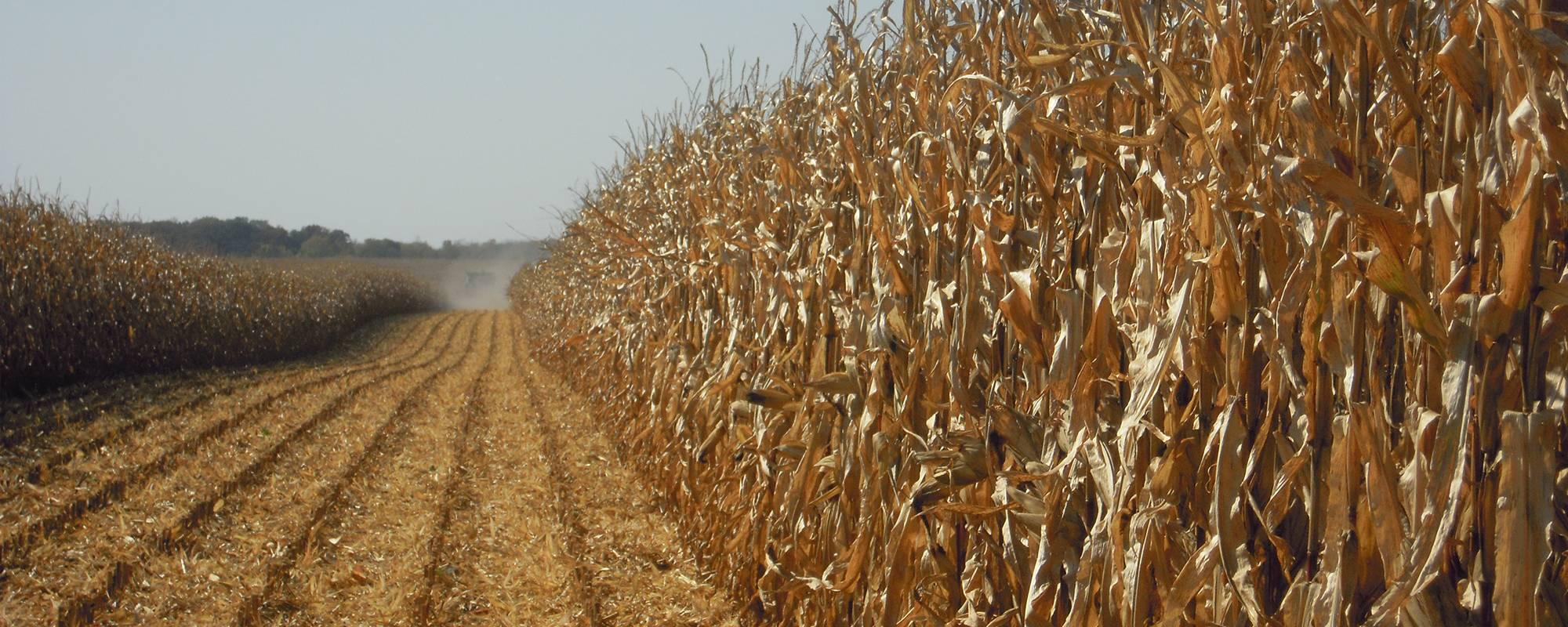 wheat sep 19