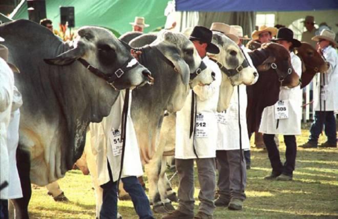 Beef Australia 2021