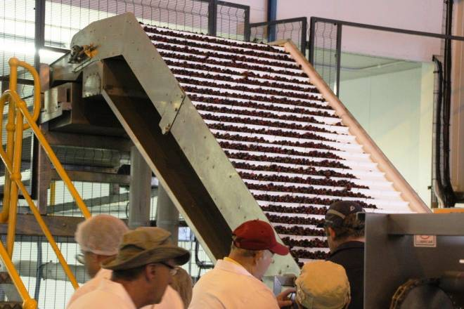 Apple and Cherry Production South Africa - We can take you there!