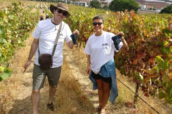 Vineyards and wine