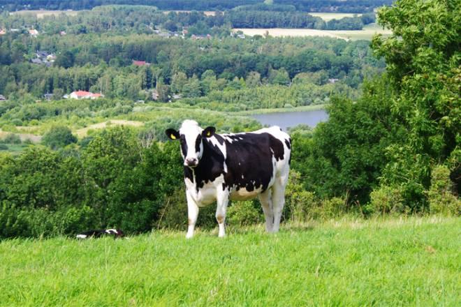 Mixed farm tour southern Sweden